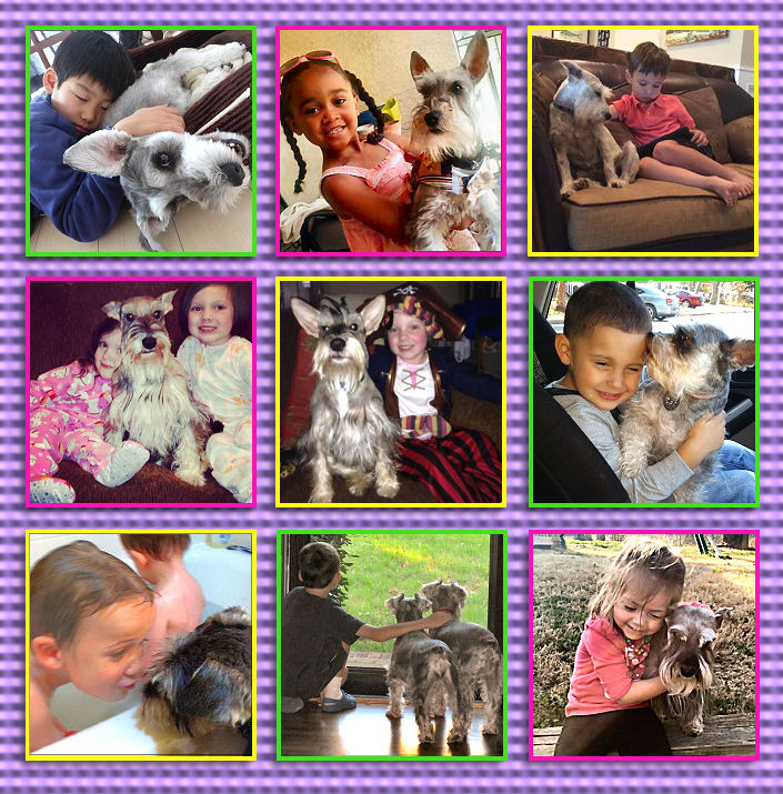 schnauzers and kids